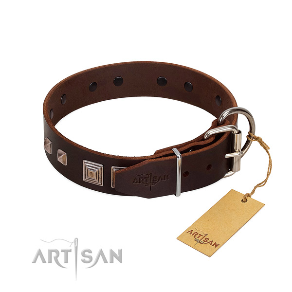 Everyday use full grain leather dog collar with extraordinary embellishments