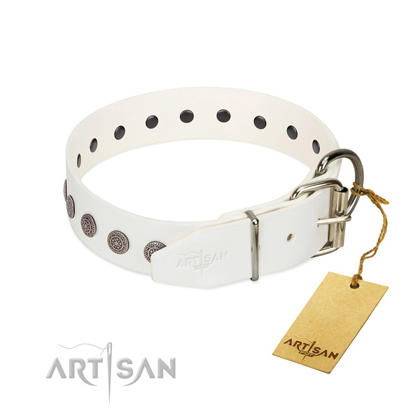 Unusual adornments on leather collar for everyday use your doggie