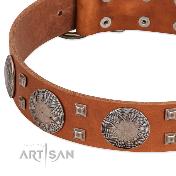 Daily use reliable full grain leather dog collar