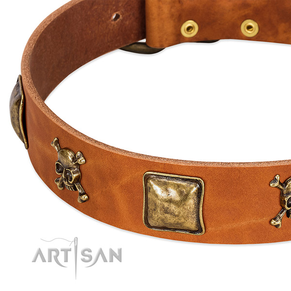 Fashionable embellishments on full grain leather collar for your dog