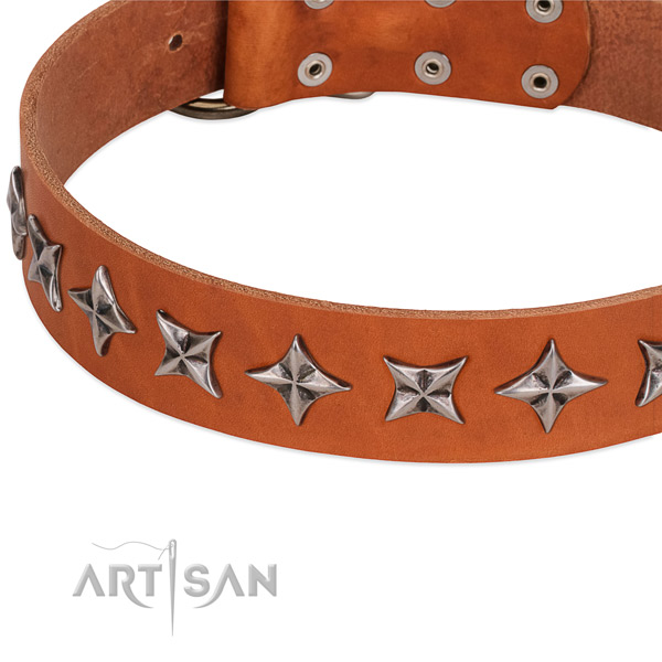 Everyday walking studded dog collar of durable full grain leather