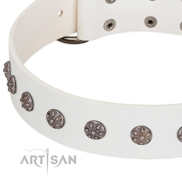 Top notch leather dog collar with adornments for your four-legged friend
