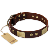 """Shining Armour"" FDT Artisan Brown Leather Pitbull Collar with Decorations"