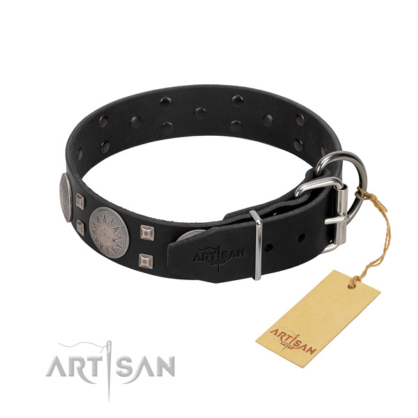 Significant full grain natural leather dog collar for walking your pet