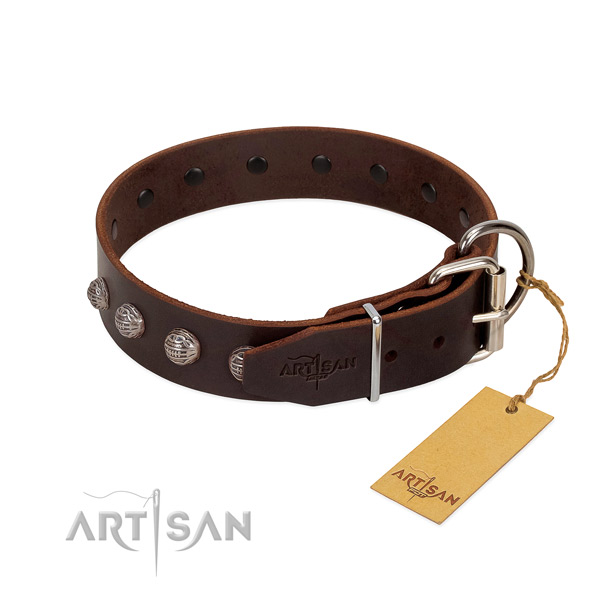 Unusual dog collar created for your attractive dog