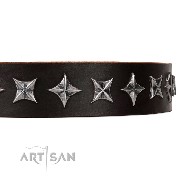 Everyday walking studded dog collar of quality leather