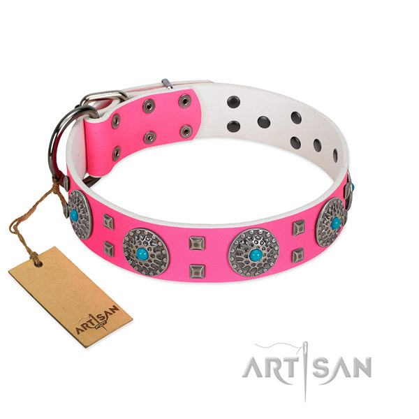 Fancy walking leather dog collar with stylish design embellishments