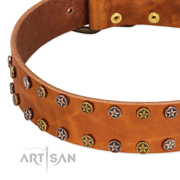 Everyday walking full grain natural leather dog collar with stylish design studs