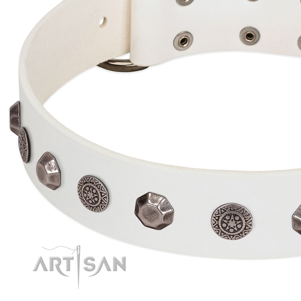 Significant full grain genuine leather collar for your canine walking in style