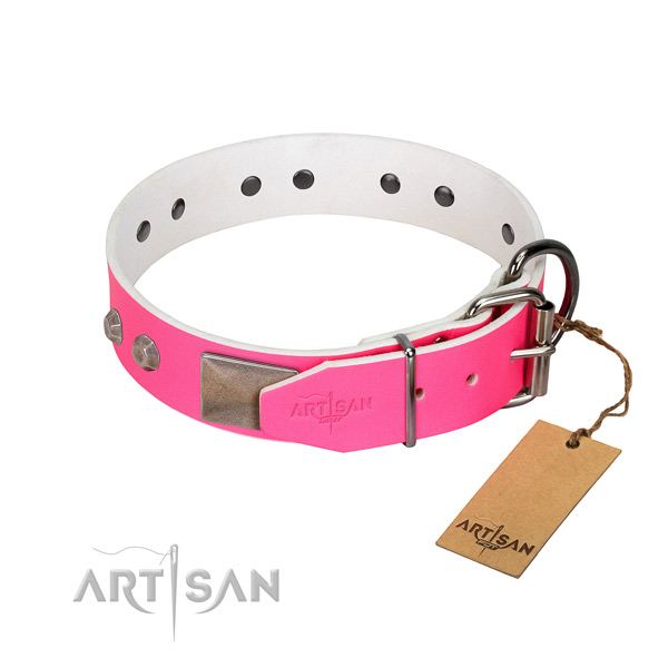 Comfy wearing dog collar of leather with trendy adornments