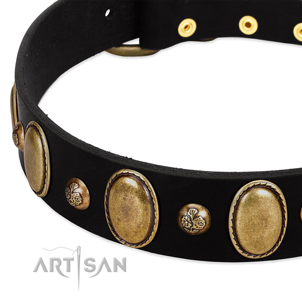 Full grain leather dog collar with significant studs