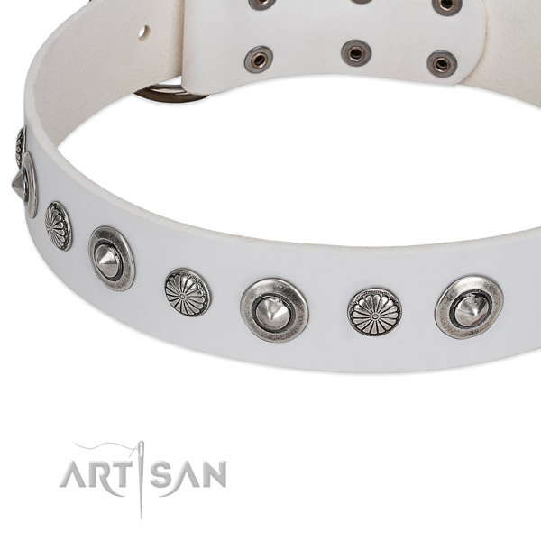 Full grain natural leather collar with corrosion resistant fittings for your lovely four-legged friend