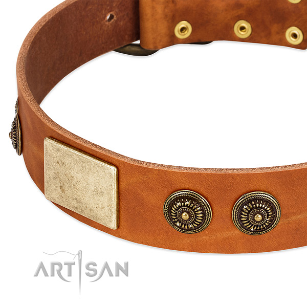 Designer dog collar crafted for your beautiful dog
