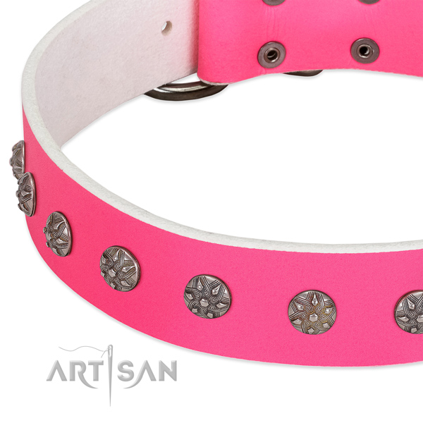 Quality natural leather dog collar with studs for your four-legged friend