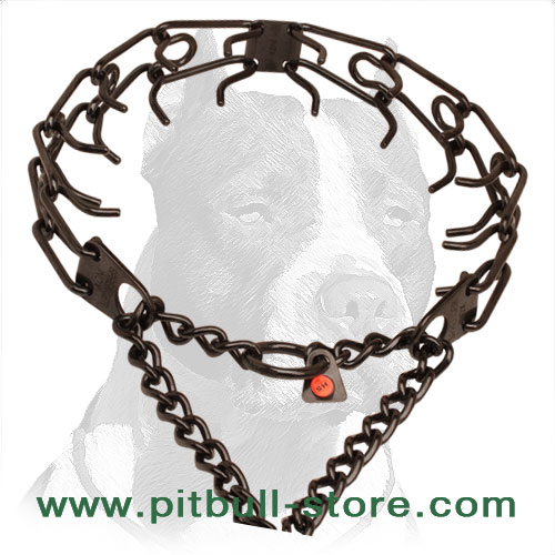 Black stainless steel pinch collar for ill behaved pets