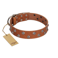 """Waltz of the Flowers"" Handmade FDT Artisan Tan Leather Pitbull Collar with Chrome-plated Engraved Studs"