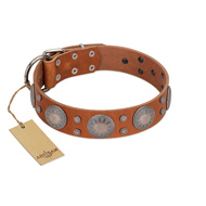 """Far Star"" FDT Artisan Tan Leather Pitbull Collar with Engraved Studs"