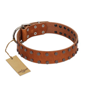"""Star Light"" Stylish FDT Artisan Tan Leather Pitbull Collar with Silver-Like Studs"