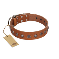 """Silver Age"" Fashionable FDT Artisan Tan Leather Pitbull Collar with Silver-Like Studs"