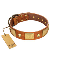 """Mutt The Daredevil"" FDT Artisan Tan Leather Pitbull Collar with Old Bronze-like Skulls and Plates"