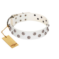 """Wild Flora"" FDT Artisan White Leather Pitbull Collar with Silver-like Engraved Studs"