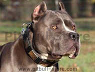 Pitbull leather dog collars for walking,tracking and training