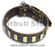 Walking PITBULL Brown dog collar 18 inch/18'' collar - S33p