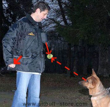 Dog Training Vest Dog trainers
