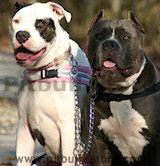 Dog Leashes,leather leashes,coupler leash,nylon dog leads, dog leads, training leads, walking dog leashes