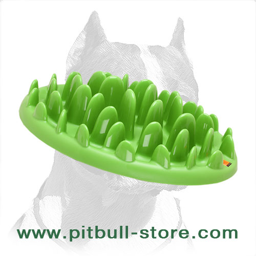Innovative Pet Feeder