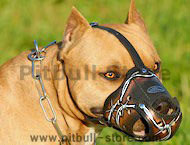 best designer leather dog muzzle for Pitbull