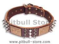 Gorgeous War Dog Leather Dog Collar-brass massive plates&spike