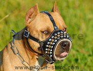 studded leather dog muzzle for pitbull/amstaff