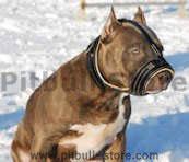 Pitbull nappa leather dog muzzle