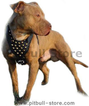 Leather dog harnesses for Pitbull mix
