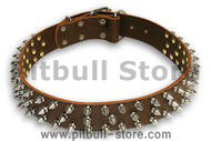 Spiked Brown collar 24'' for PITBULL /24 inch dog collar - S44
