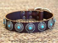 leather pit bull collar