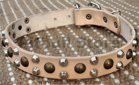 custom fun dog collar