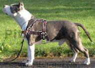 Pitbull Tracking / Pulling / Agitation Leather Dog Harness